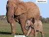 elephantbm