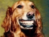 sourire06