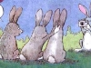 lapinoreilles