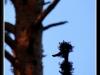 naughty_woodpecker____by_yancis-d4khd36