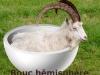 bouchemi